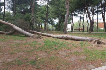 El Ayuntamiento de Petrer trabaja para valorar y  reparar los daños del temporal