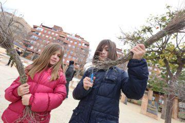 La concejalía de Medio Ambiente hace recomendaciones para la recolección de esparto para las fallas de la noche de Reyes