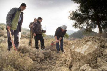 Petrer celebra el domingo el Día del Árbol con 800 plantones para los participantes