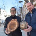 El Ayuntamiento de Petrer sustituye varios árboles de la avda. Felipe V tras detectarse varios olmos enfermos