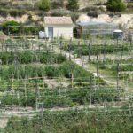 Petrer abre una nueva convocatoria para adjudicar los huertos ecológicos de Ferrussa