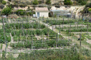 Petrer obri una nova convocatòria per a adjudicar els horts ecològics de Ferrussa