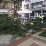 El Ayuntamiento pedirá un estudio técnico sobre los árboles de la plaça de Baix tras desplomarse una rama de grandes dimensiones