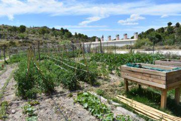 46 vecinos optan a los 16 huertos ecológicos de Petrer