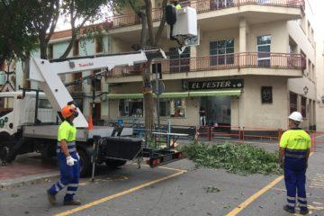 El Ayuntamiento decide llevar a cabo una poda severa de los olmos de la plaça de Baix para garantizar la seguridad