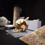 Petrer cerrará 2020 con el Museo Dámaso Navarro totalmente acabado