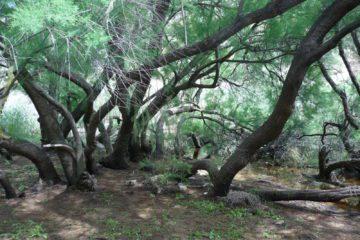 Elda y Petrer trabajan conjuntamente para declarar El Pantano como Paraje Natural Municipal