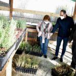 Petrer organiza un día del Árbol diferente con el reparto de plantones para que cada vecino los plante de manera individual