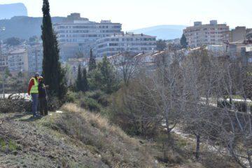 Petrer acondiciona más de 800 metros de vegetación en el tramo urbano de la Rambla del Molins