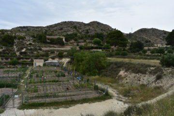 Petrer programa la ampliación de los huertos ecológicos de Ferrusa con 15 nuevas parcelas de 60 m²
