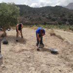 Comencen els sondejos arqueològics en l'alqueria de Puça a la recerca de les arrels medievals de Petrer