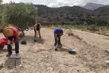 Comienzan los sondeos arqueológicos en la alquería de Puça en busca de las raíces medievales de Petrer